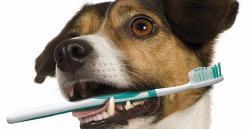 Чистка зубов без наркоза