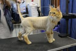 Для чего кошке нужна стрижка?