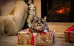 Как выбрать подарок для вашей кошки